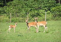 一時養鹿管理地
